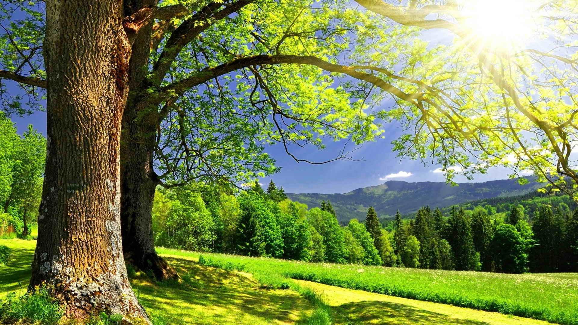 Стихия Дерево - элемент фен шуй
